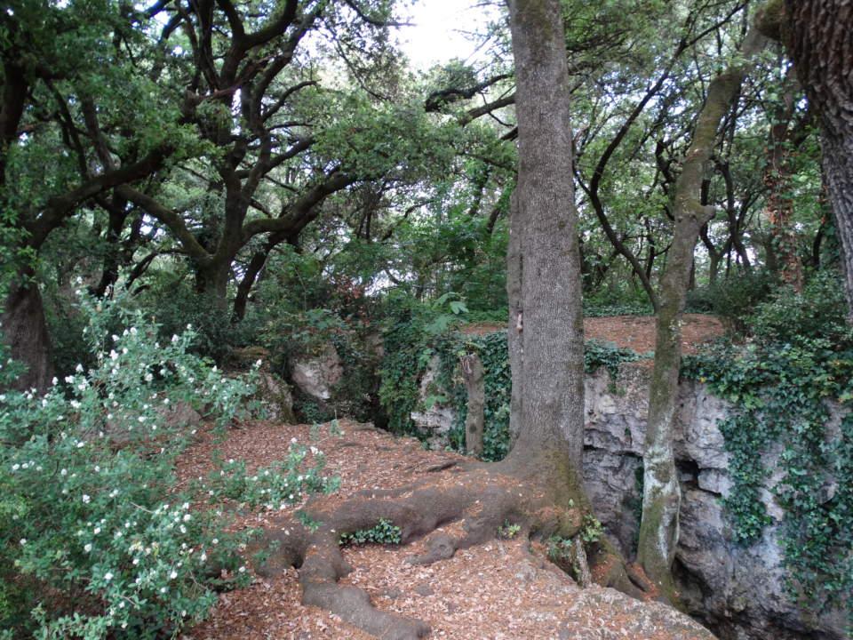 """Activitat familiar """"Visita guiada al bosc de les Estunes i tir amb arc"""""""