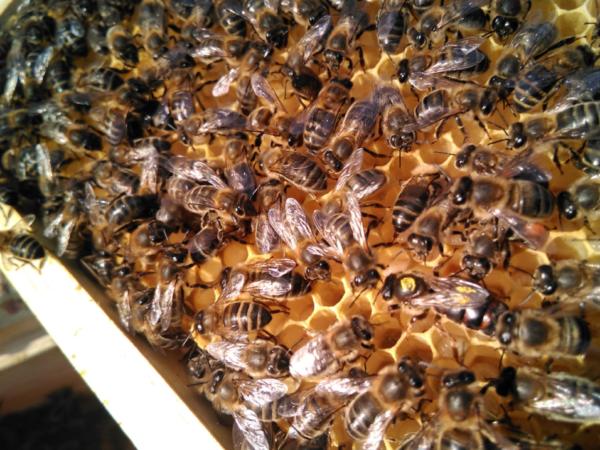 Experiències - Tast de mel