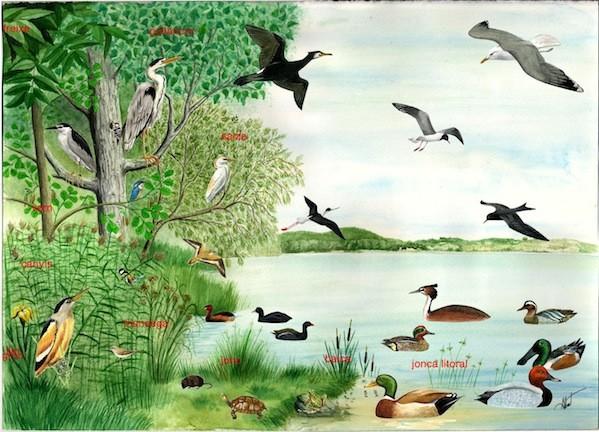 Activitat familiar - Ajudem els ocells!