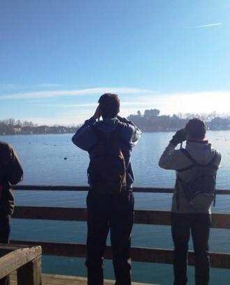 XXIII Cens d'ocells aquàtics hivernats a l'Estany