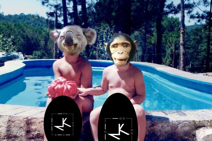 Músiques modernes - Micos i Koalas