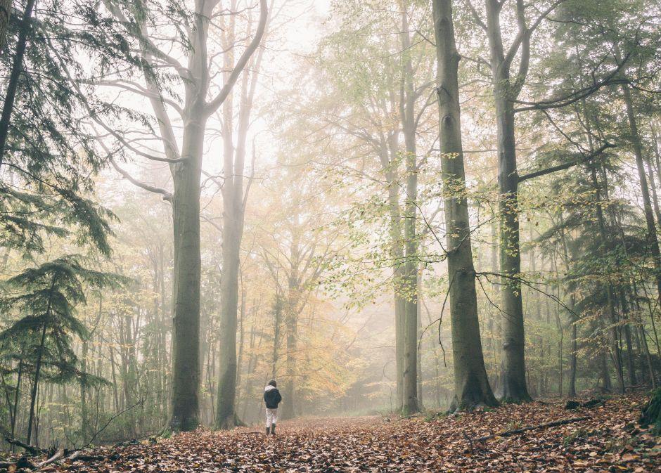 Bibliocinema - Diari de bosch