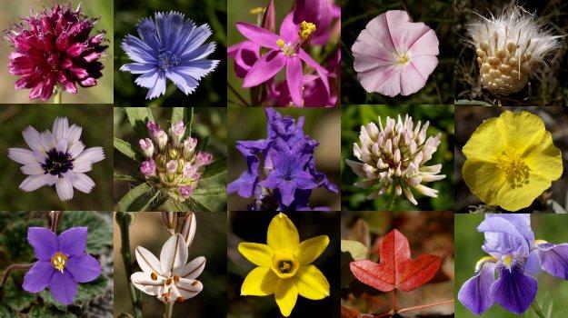 """Xerrades - Les plantes silvestres: """"Nutrició i medicina natural"""""""