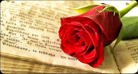 Diada de Sant Jordi a Serinyà