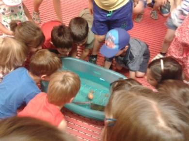 """Experiments i activitats de camp - Fem de científics a l'estany """"Descobrim el travertí"""""""