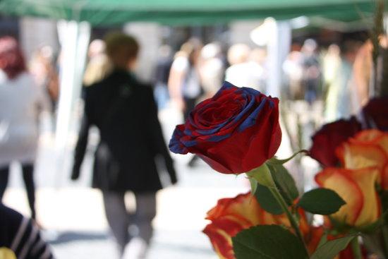 Diada de Sant Jordi a Esponellà