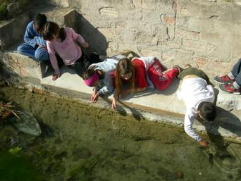 Activitat familiar - Matins verds: Joc el misteri de l'aigua