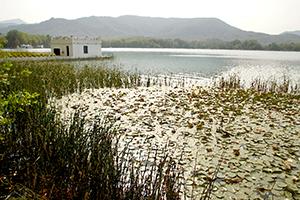 Xerrada -  L'art pictòric al voltant de l'estany