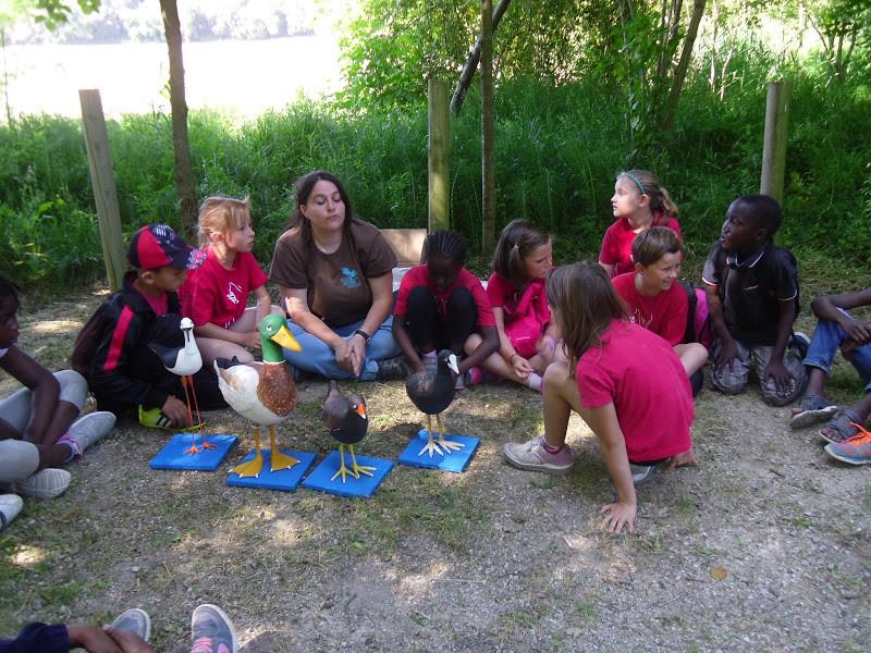 Experiments i activitats de Camp - Fem de científics a l'estany: descobrim els ocells
