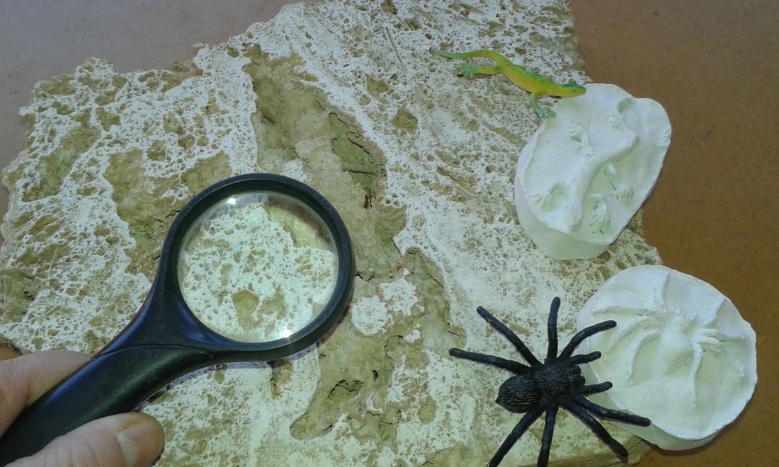Experiments i activitats de camp - Fem de científics a l'estany: descobrim el travertí
