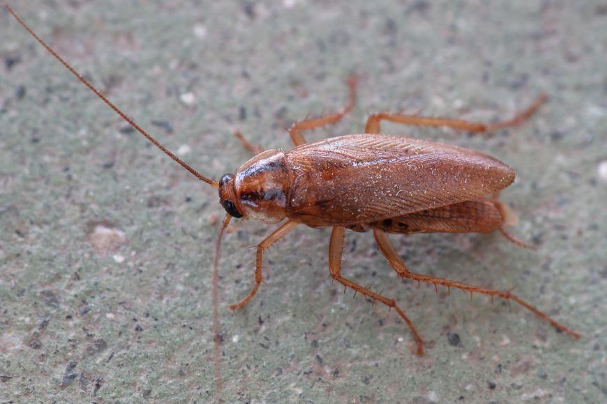 Tardes de ciència - Els escarabats de cuina