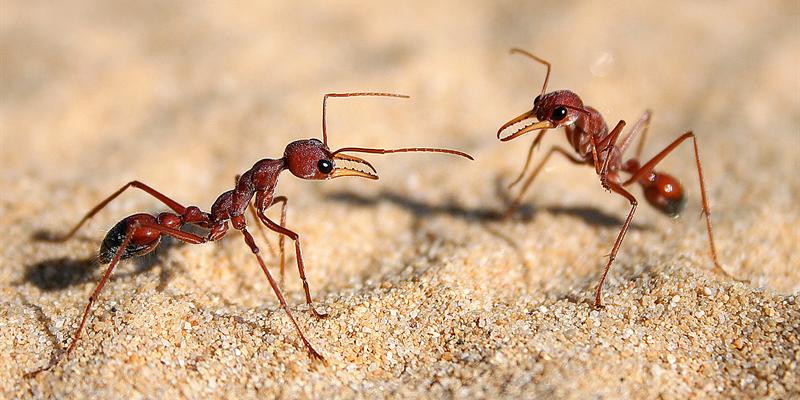 Tardes de Ciència - Xerrada: Formigues des de Troia fins a la Nasa