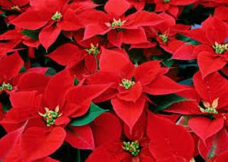 Parada de Nadal a Serinyà