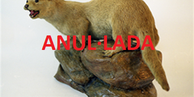 Activitat familiar: Investiguem els mamífers