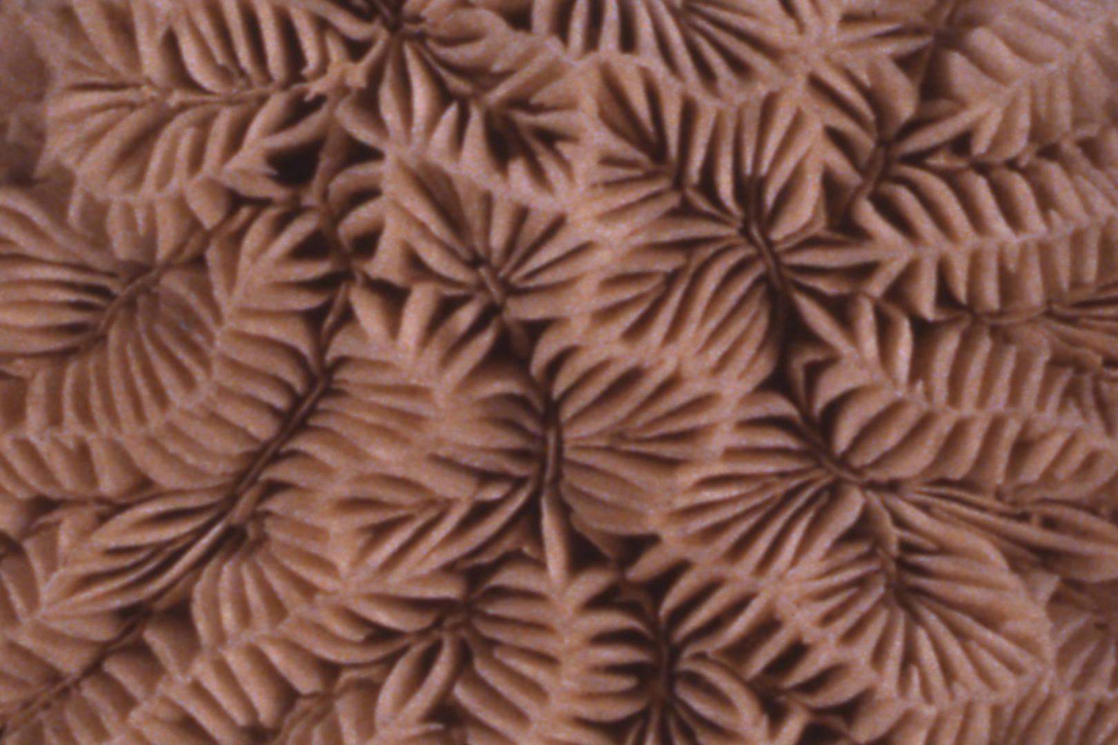 Coralls: indicadors del canvi climàtic, exposició