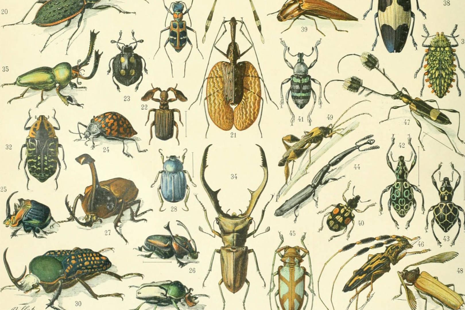Descobrim els insectes, taller familiar