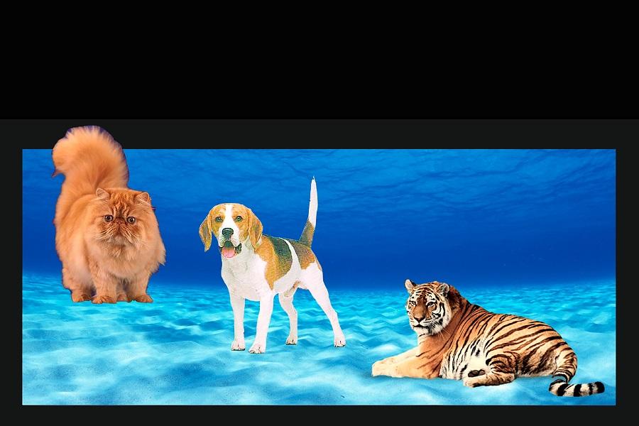 Gats, gossos i tigres sota el mar?, Tardes de ciència ONLINE