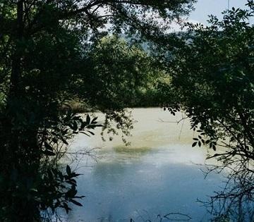 Itinerari als aiguamolls de la Puda